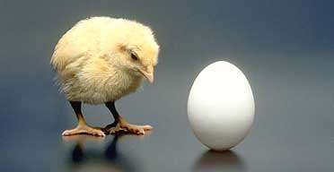 chickenegg GMAT Strategies: Psychology and Timing Strategies